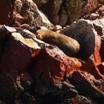 happy little sea lion!