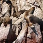 Sea lions are amazing sun bathers